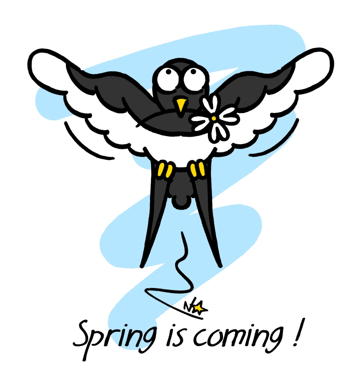 Hirondelle, Drave de printemps, Spring is coming!